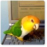 Twiki-Birdie